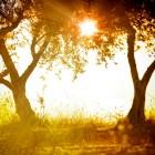 Verstandig genieten van de zon